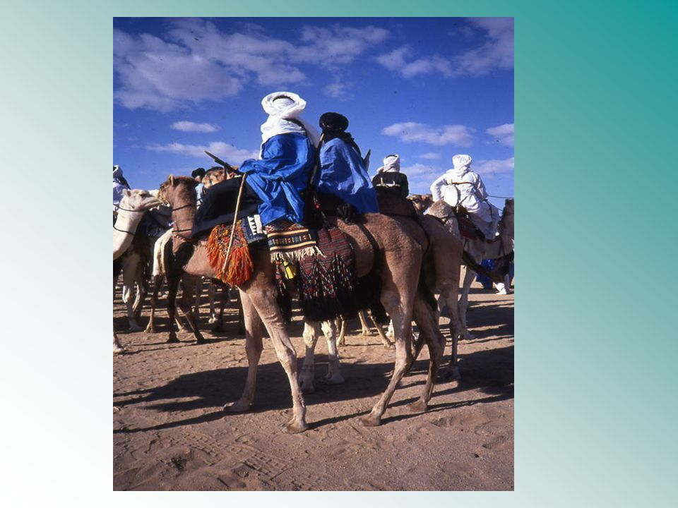 The Camel Very strong pack animals Technology: Development of war saddle aided in control of the caravan routes Wheeled vehicles disappeared in Arabian area.
