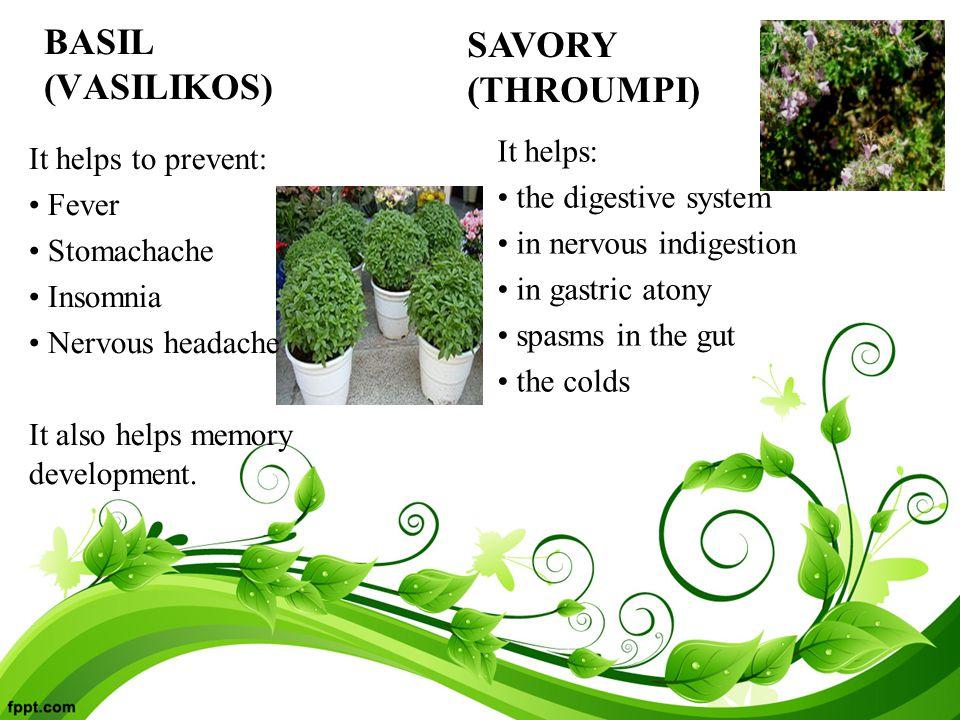 BASIL (VASILIKOS) It helps to prevent: Fever Stomachache Insomnia Nervous headache It also helps memory development.