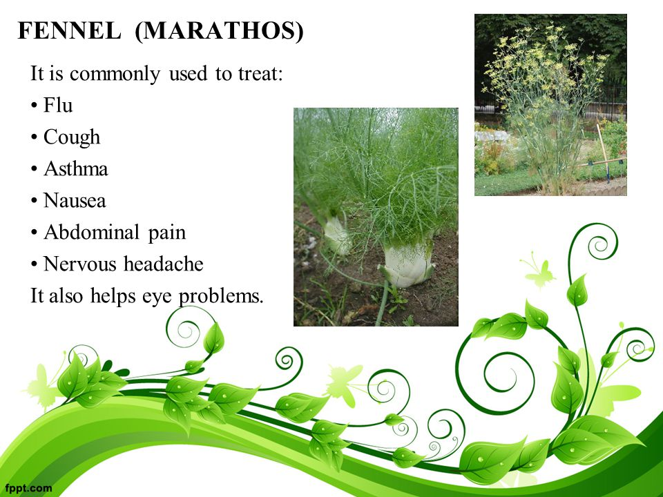 FENNEL (MARATHOS) It is commonly used to treat: Flu Cough Asthma Nausea Abdominal pain Nervous headache It also helps eye problems.