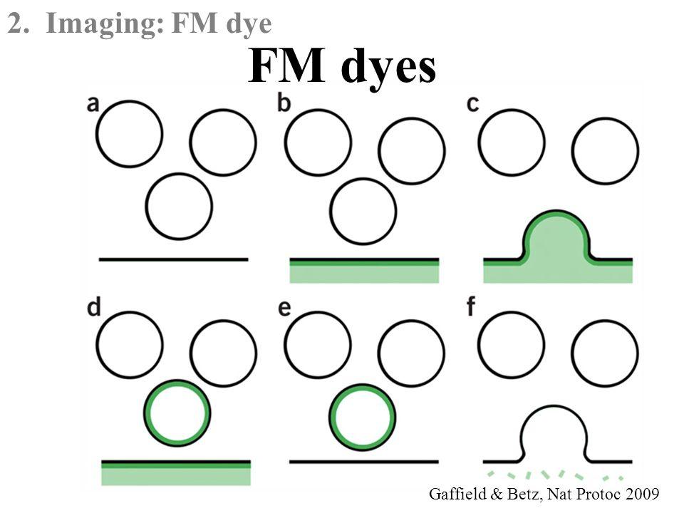 Gaffield & Betz, Nat Protoc 2009 2. Imaging: FM dye FM dyes