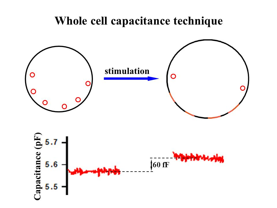 Patch pipette Detection in exocytosis and endocytosis of single vesicles by cell-attached capacitance technique Conductance Capacitance Im Exocytosis Endocytosis Kiss-and-run