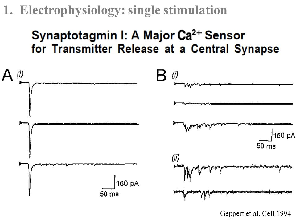 Geppert et al, Cell 1994 1.Electrophysiology: single stimulation