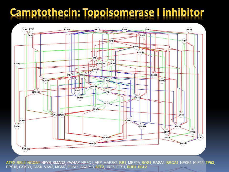 ATF2, RBL2, NCOA1, NFYB, SMAD2, YWHAZ, NR3C1, APP, MAP3K5, RB1, MEF2A, SOS1, RASA1, BRCA1, NFKB1, KLF12, TP53, EPS15, GSK3B, CASK, VAV2, MCM7, FOSL1, AKAP13, ATF3, IRF5, ETS1, BUB1, BCL2