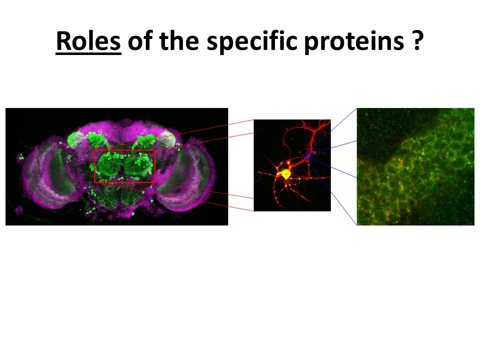 Roles of the specific proteins ?