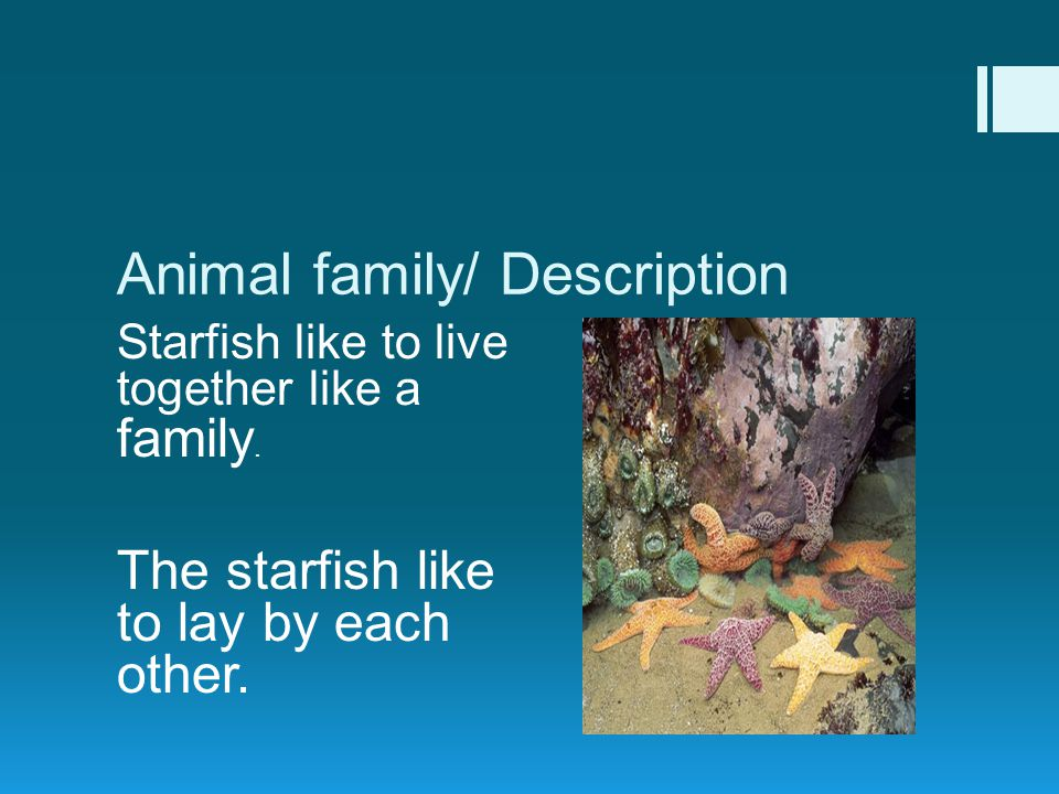 Animal family/ Description Starfish like to live together like a family.