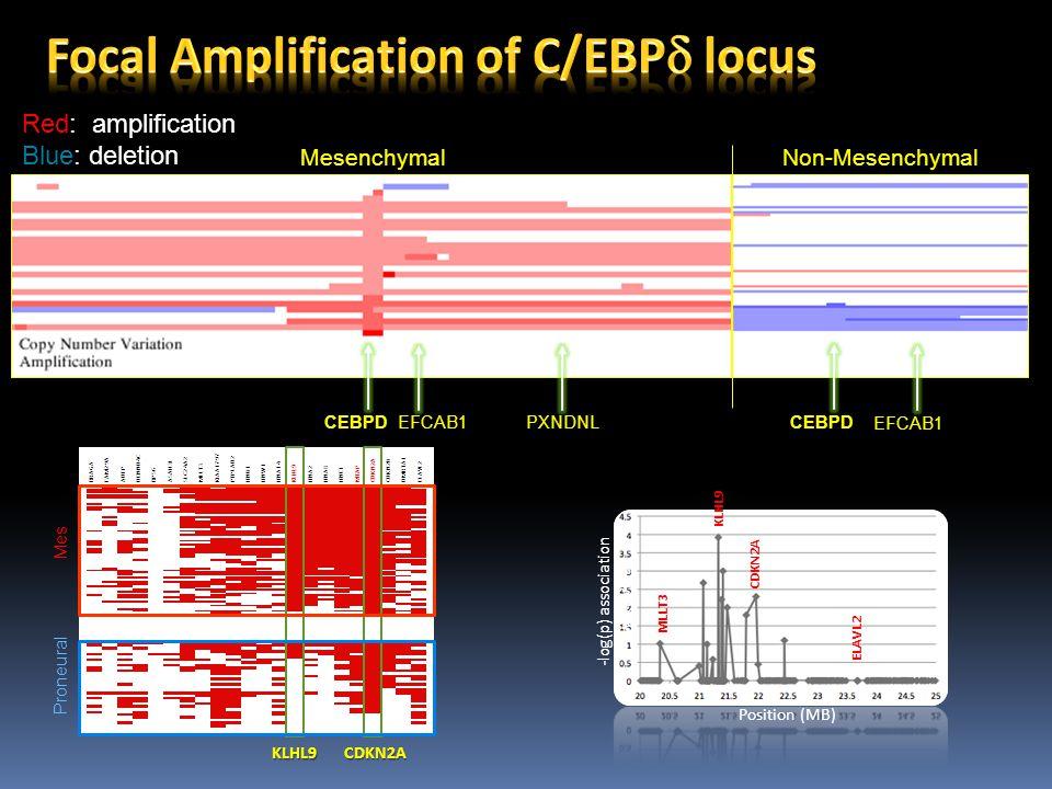 CEBPD EFCAB1 PXNDNL MesenchymalNon-Mesenchymal CEBPD EFCAB1 Red: amplification Blue: deletion KLHL9 MLLT3 CDKN2A ELAVL2 -log(p) association with MES Position (MB) Proneural Mes CDKN2AKLHL9