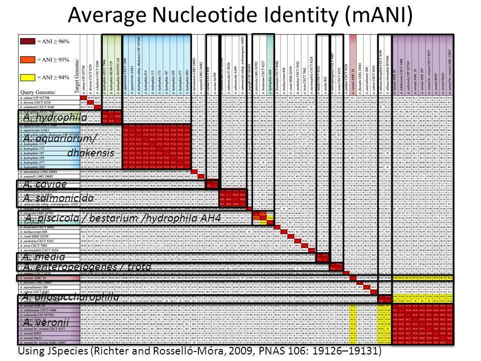 Average Nucleotide Identity (mANI) A. hydrophila A.