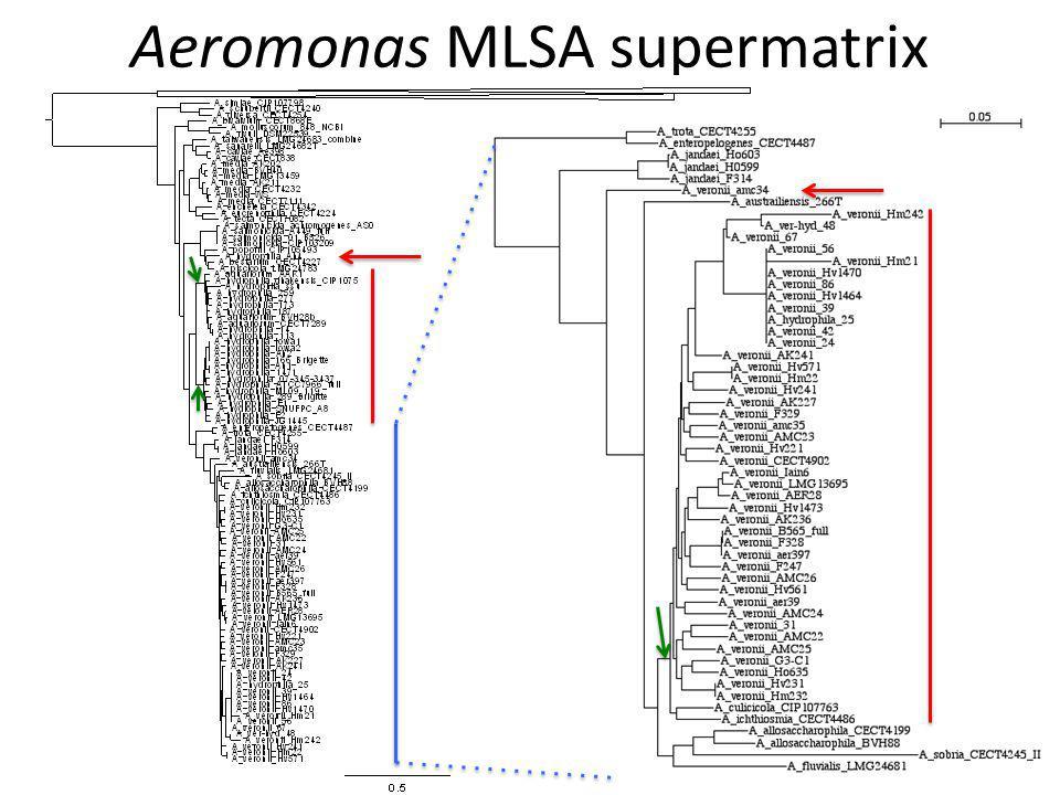 Aeromonas MLSA supermatrix