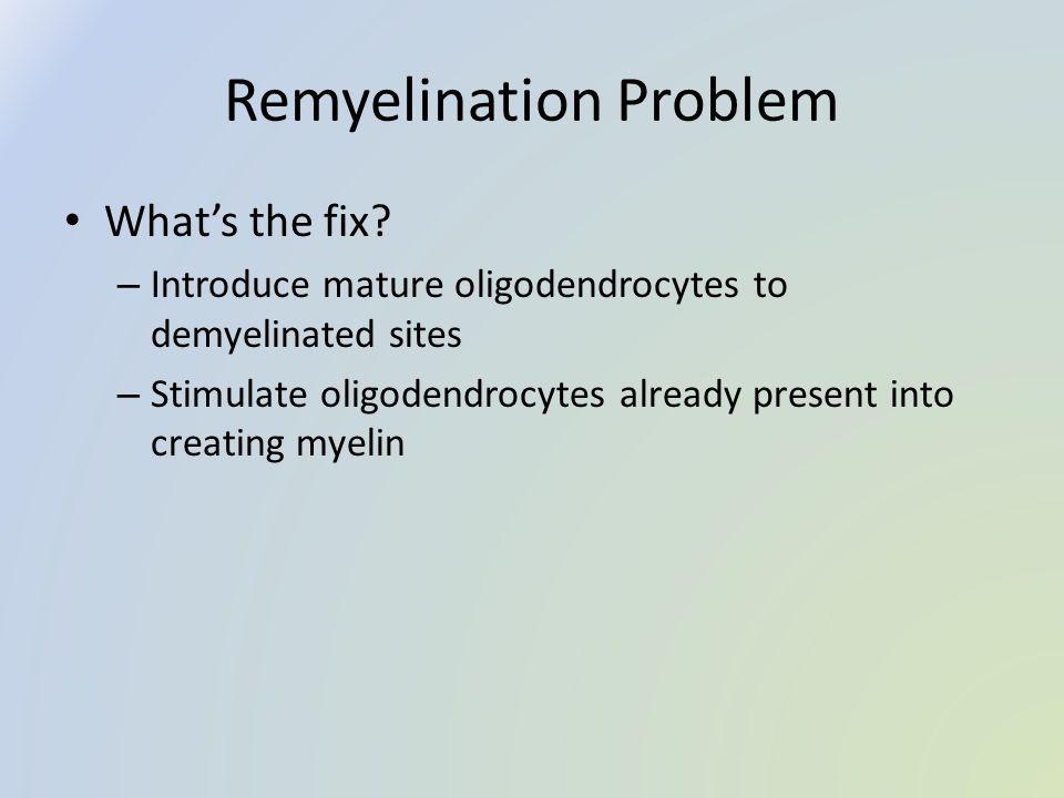 Remyelination Problem What's the fix? – Introduce mature oligodendrocytes to demyelinated sites – Stimulate oligodendrocytes already present into crea