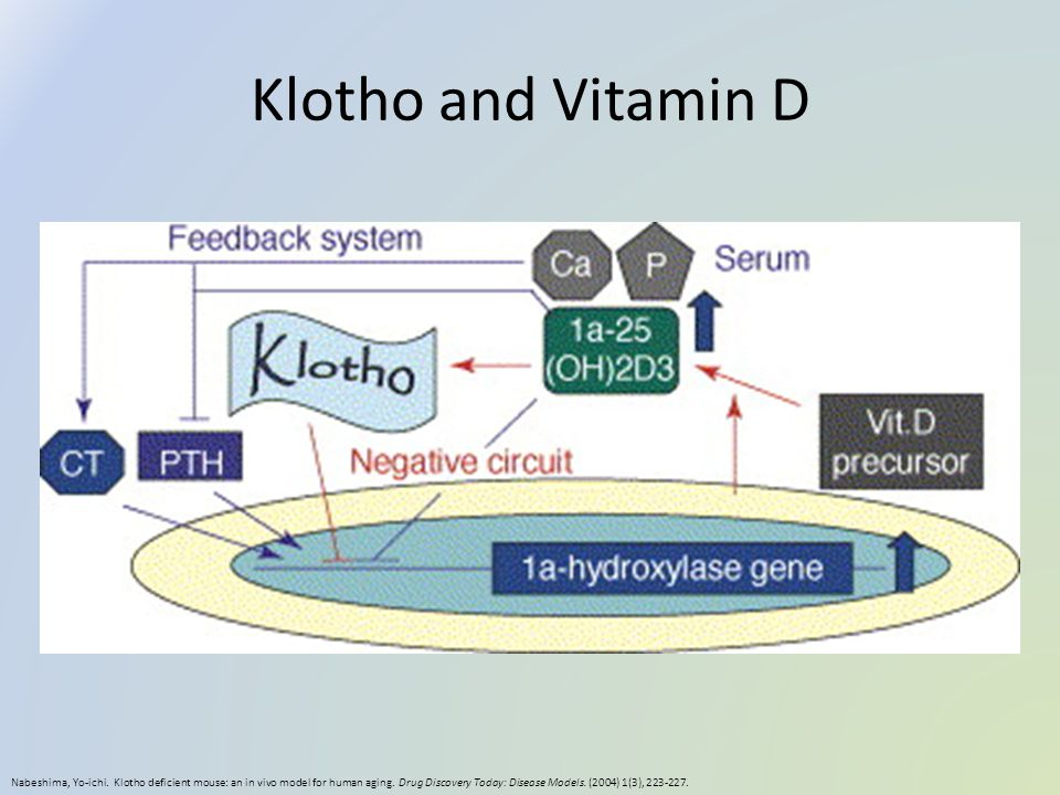 Klotho and Vitamin D Nabeshima, Yo-ichi. Klotho deficient mouse: an in vivo model for human aging. Drug Discovery Today: Disease Models. (2004) 1(3),