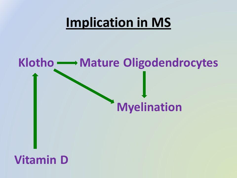 Implication in MS KlothoMature Oligodendrocytes Myelination Vitamin D