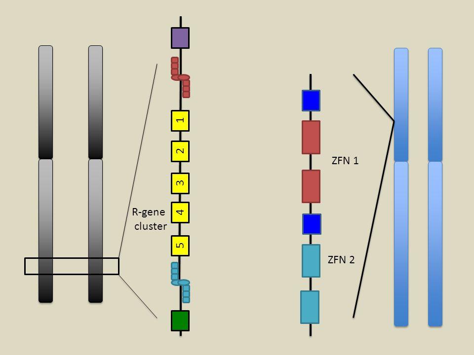 1 2 3 4 5 ZFN 1 ZFN 2 R-gene cluster
