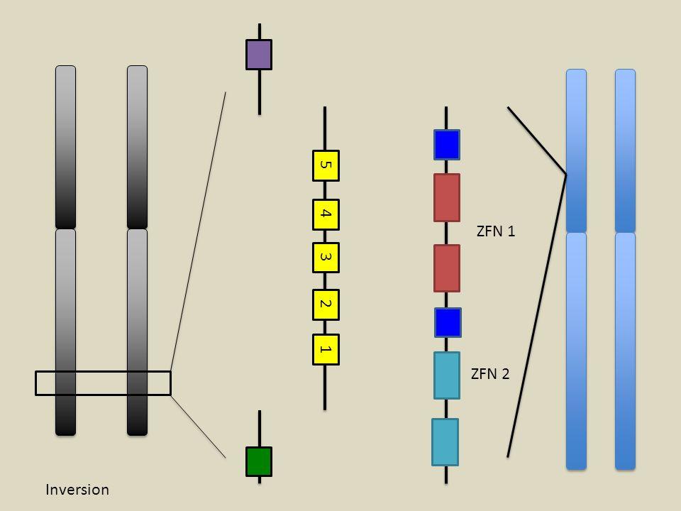 ZFN 1 ZFN 2 Inversion 1 2 3 4 5