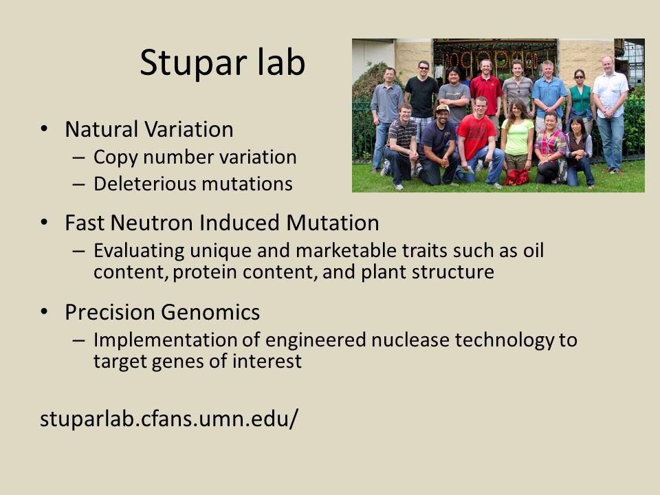 Stupar lab Natural Variation – Copy number variation – Deleterious mutations Fast Neutron Induced Mutation – Evaluating unique and marketable traits s