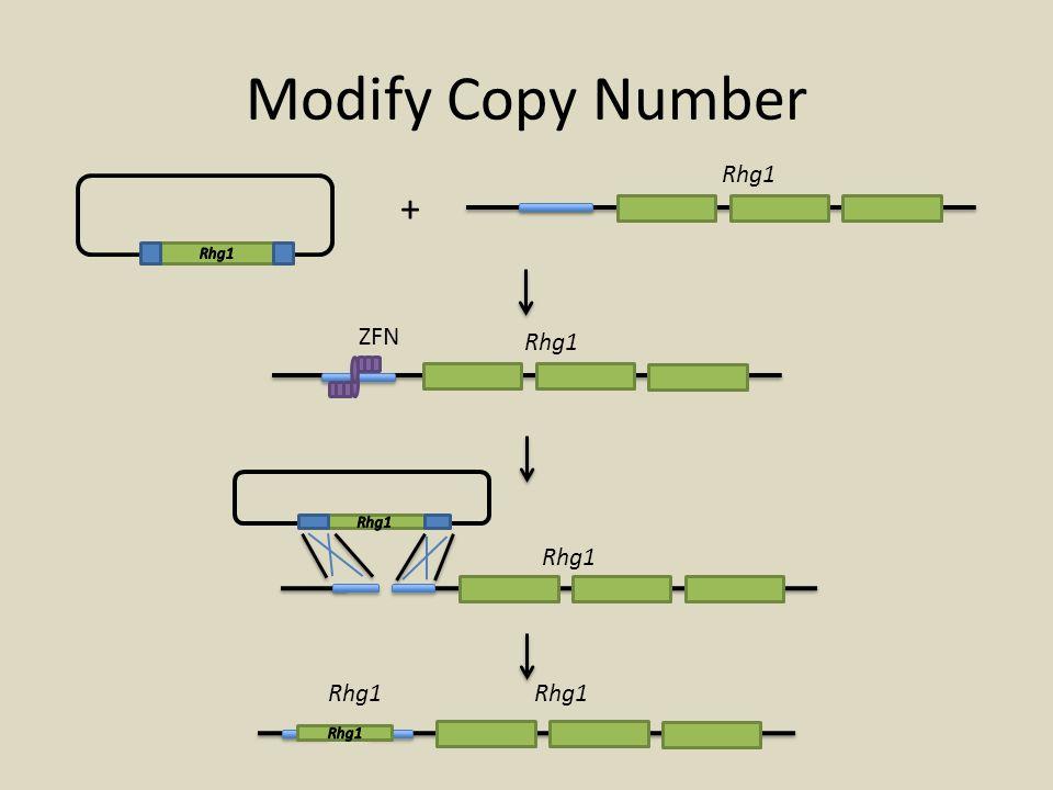 Modify Copy Number + Rhg1 ZFN Rhg1