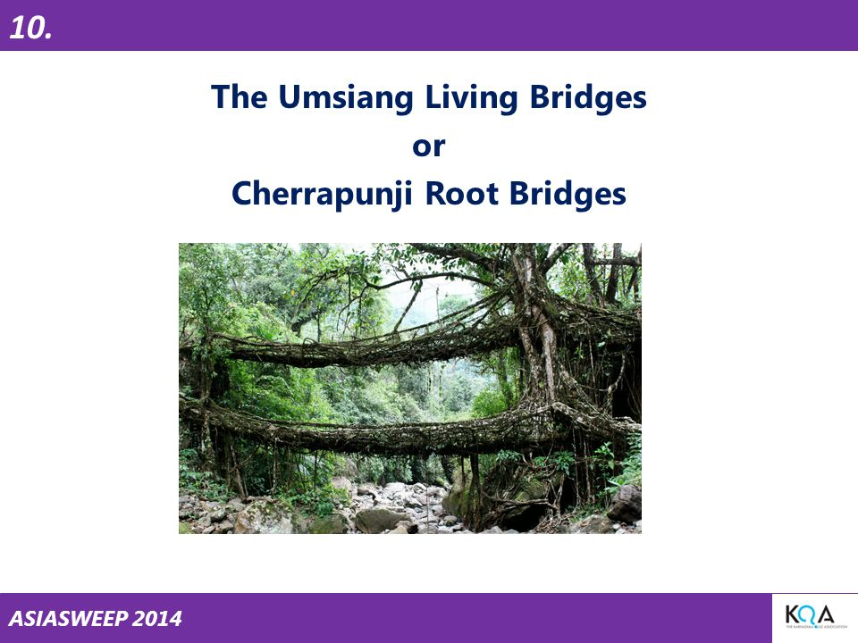 ASIASWEEP 2014 The Umsiang Living Bridges or Cherrapunji Root Bridges 10.