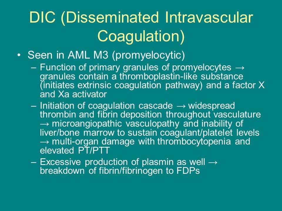 DIC (Disseminated Intravascular Coagulation) Seen in AML M3 (promyelocytic) –Function of primary granules of promyelocytes → granules contain a thromb