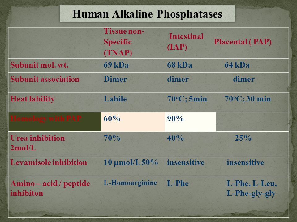 PAPBONE INTESTINAL L-Phe L-Phe-gly-gly L-Phe L-Homo THESE INHIBITORS ARE : (i) Isozyme specific (i) Isozyme specific (ii) Bind to defined sites on the molecule (ii) Bind to defined sites on the molecule Alkaline Phosphatase Isozymes