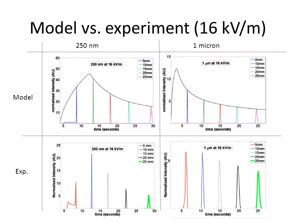 Model vs. experiment (16 kV/m) Model Exp. 250 nm1 micron
