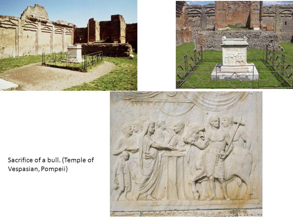 Sacrifice of a bull. (Temple of Vespasian, Pompeii)