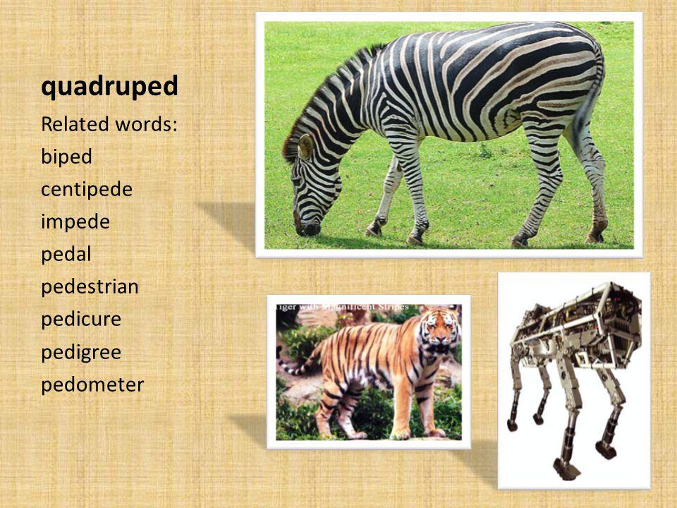 quadruped Related words: biped centipede impede pedal pedestrian pedicure pedigree pedometer