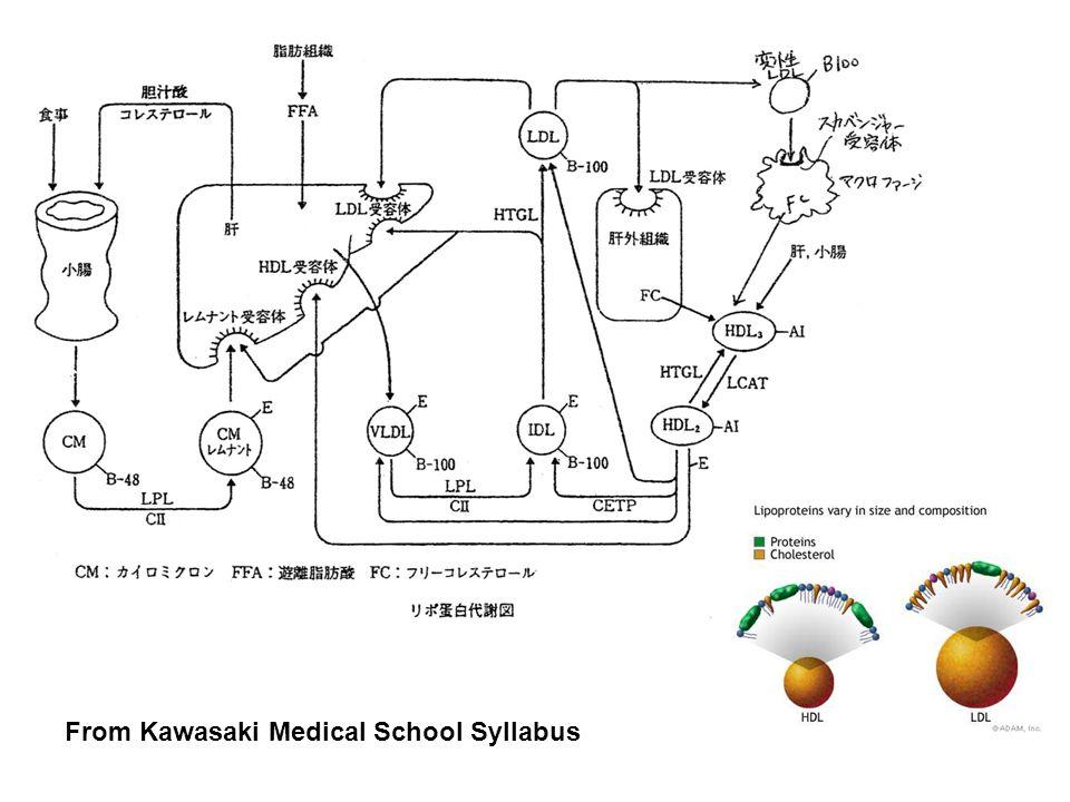 From Kawasaki Medical School Syllabus