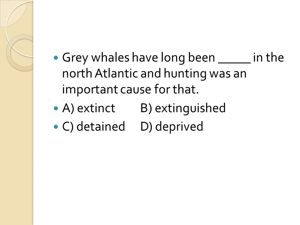 Grey whales have long been _____ in the north Atlantic and hunting was an important cause for that.