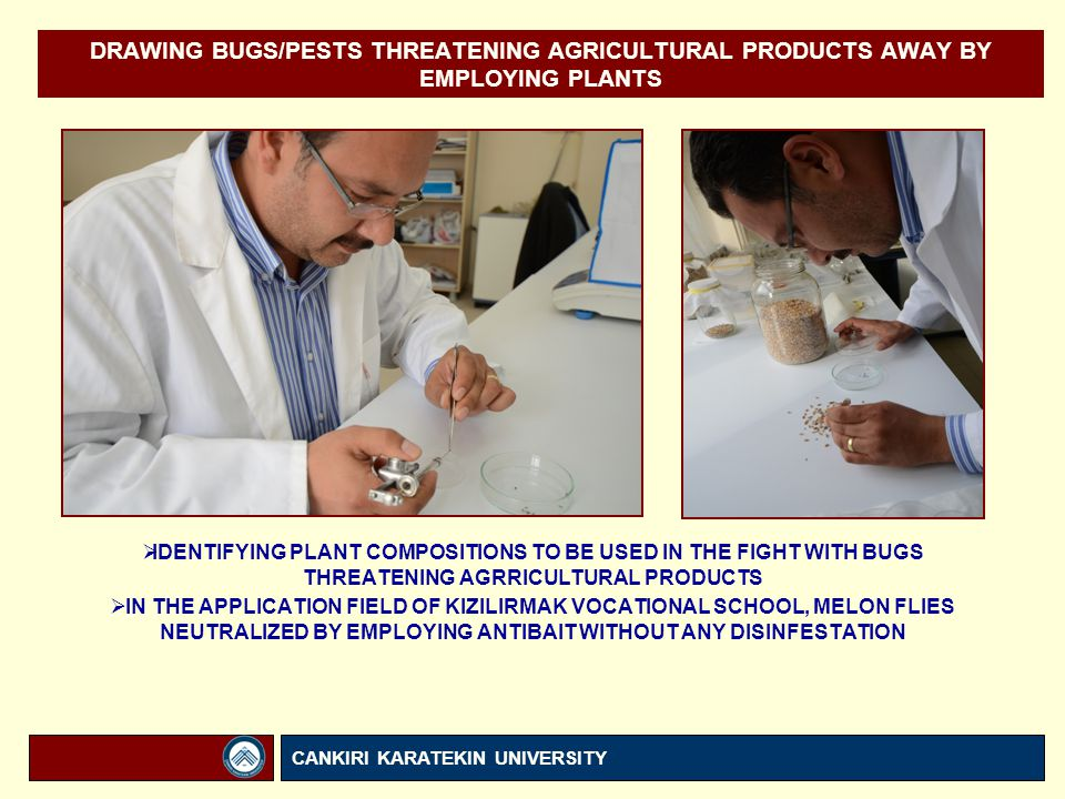 DRAWING BUGS/PESTS THREATENING AGRICULTURAL PRODUCTS AWAY BY EMPLOYING PLANTS  IDENTIFYING PLANT COMPOSITIONS TO BE USED IN THE FIGHT WITH BUGS THREATENING AGRRICULTURAL PRODUCTS  IN THE APPLICATION FIELD OF KIZILIRMAK VOCATIONAL SCHOOL, MELON FLIES NEUTRALIZED BY EMPLOYING ANTIBAIT WITHOUT ANY DISINFESTATION CANKIRI KARATEKIN UNIVERSITY