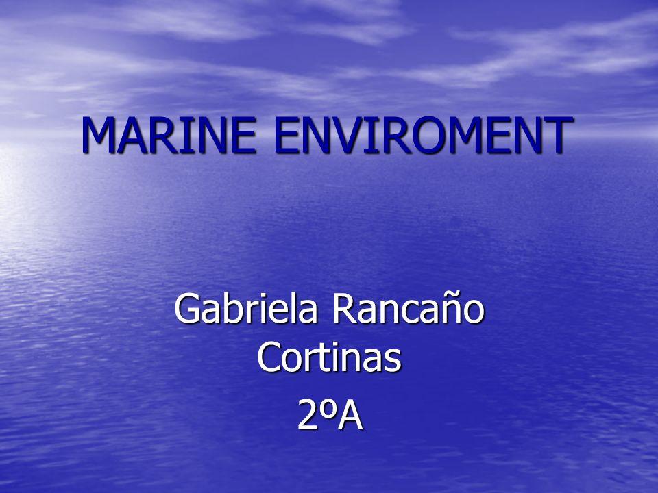 MARINE ENVIROMENT Gabriela Rancaño Cortinas 2ºA