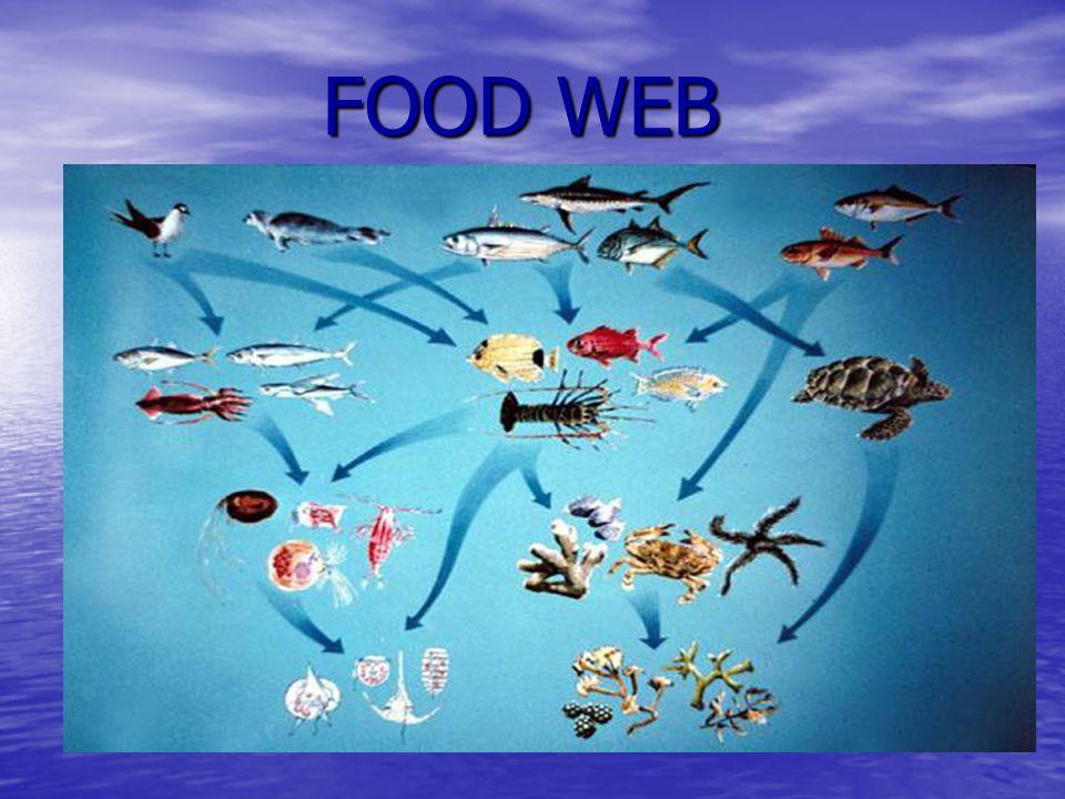 FOOD WEB FOOD WEB