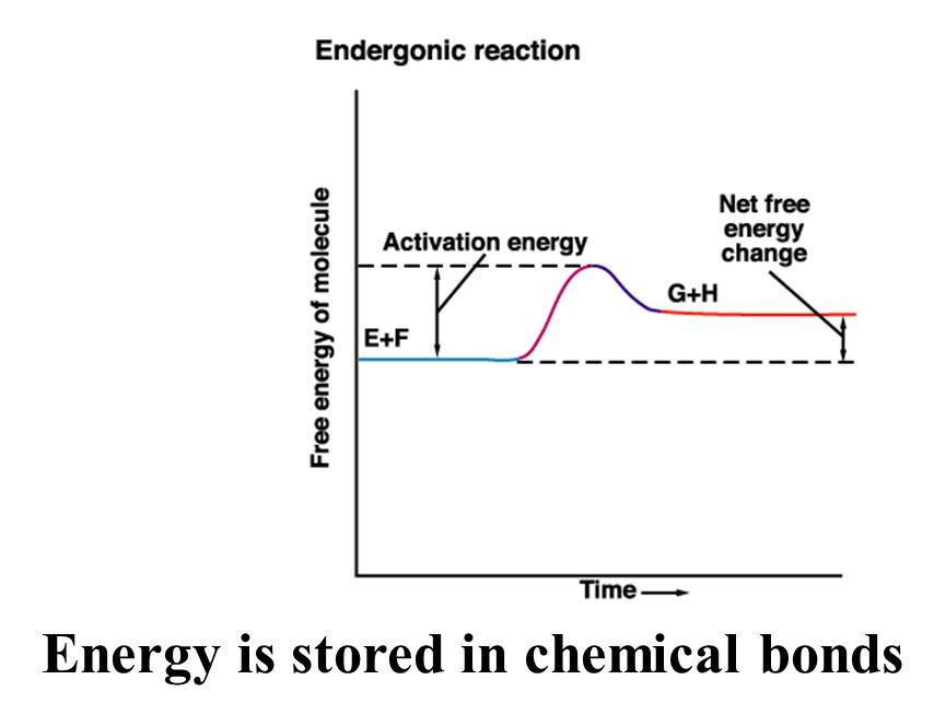 Energy is stored in chemical bonds