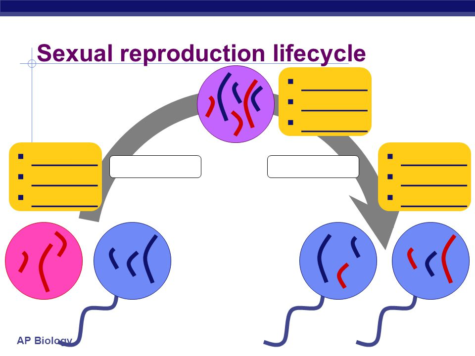 AP Biology Meiosis: production of gametes  Alternating processes, alternating stages  chromosome number must be reduced  diploid  haploid  2n  n