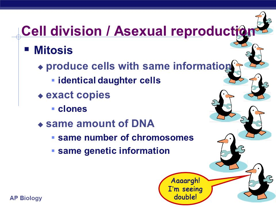 AP Biology 2007-2008 Meiosis & Sexual Reproduction