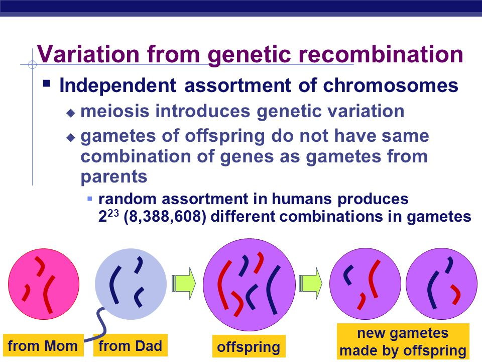 AP Biology The value of sexual reproduction  Sexual reproduction introduces genetic variation  genetic recombination during meiosis  independent as