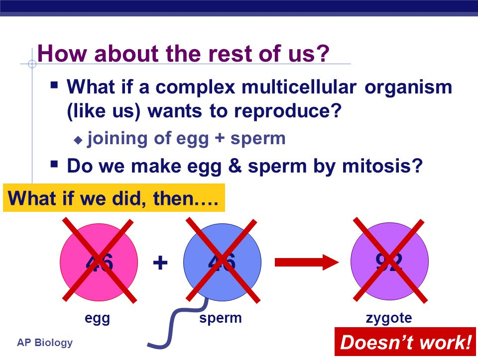 AP Biology Asexual reproduction  Single-celled eukaryotes  yeast (fungi)  Protists  Paramecium  Amoeba  Simple multicellular eukaryotes  Hydra