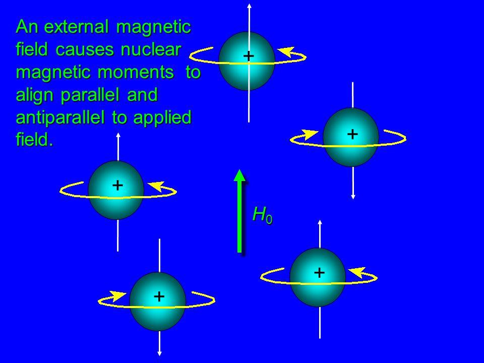 + + + + + An external magnetic field causes nuclear magnetic moments to align parallel and antiparallel to applied field.