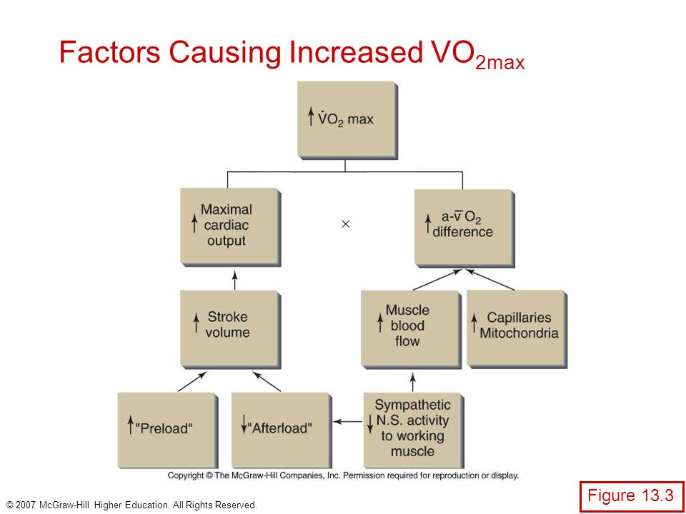 © 2007 McGraw-Hill Higher Education. All Rights Reserved. Factors Causing Increased VO 2max Figure 13.3