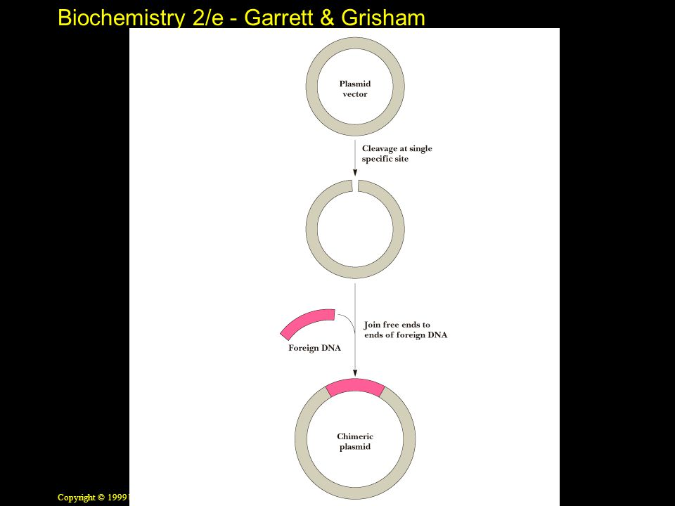 Biochemistry 2/e - Garrett & Grisham Copyright © 1999 by Harcourt Brace & Company Chimeric Plasmids Named for mythological beasts with body parts from several creatures After cleavage of a plasmid with a restriction enzyme, a foreign DNA fragment can be inserted Ends of the plasmid/fragment are closed to form a recombinant plasmid Plasmid can replicate when placed in a suitable bacterial host See Figure 13.3