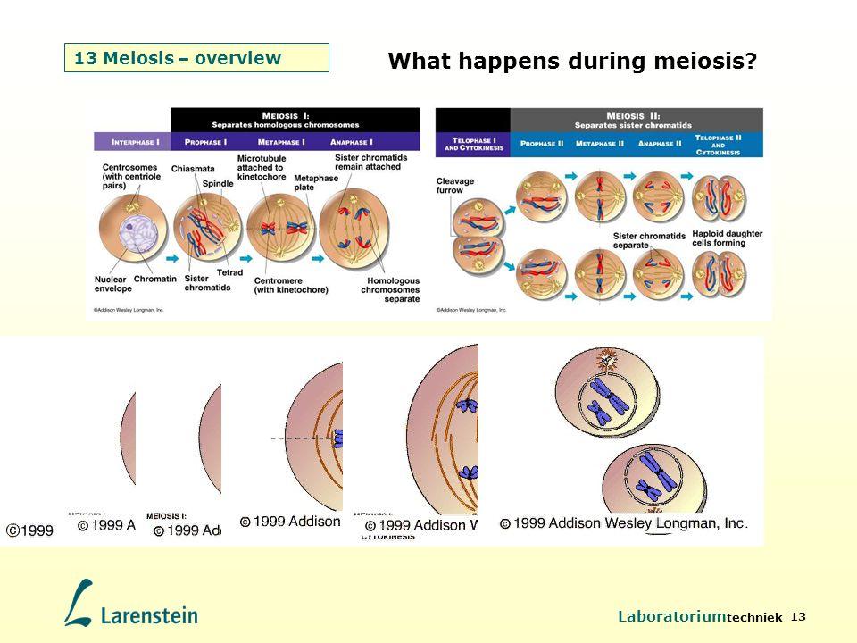 Laboratorium techniek 13 13 Meiosis – overview What happens during meiosis?