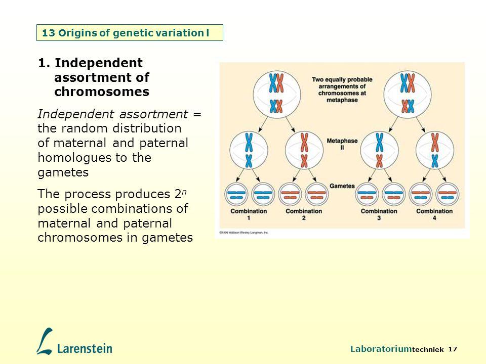 Laboratorium techniek 17 13 Origins of genetic variation l 1. Independent assortment of chromosomes Independent assortment = the random distribution o