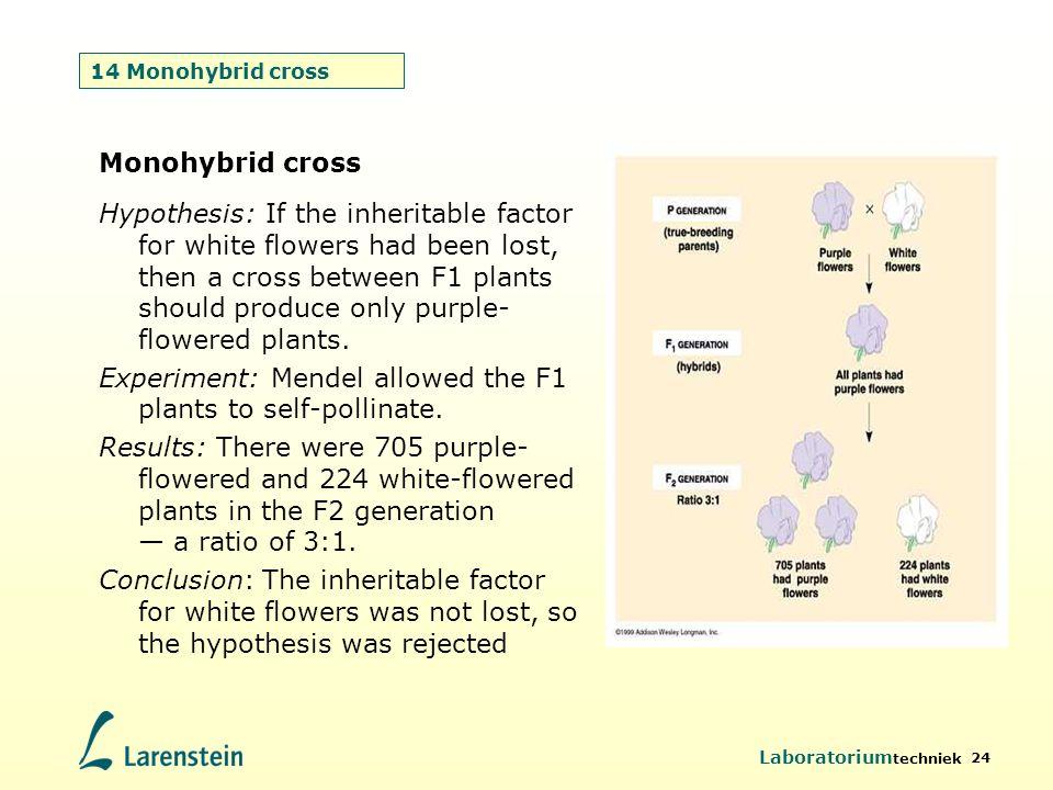 Laboratorium techniek 24 14 Monohybrid cross Monohybrid cross Hypothesis: If the inheritable factor for white flowers had been lost, then a cross betw