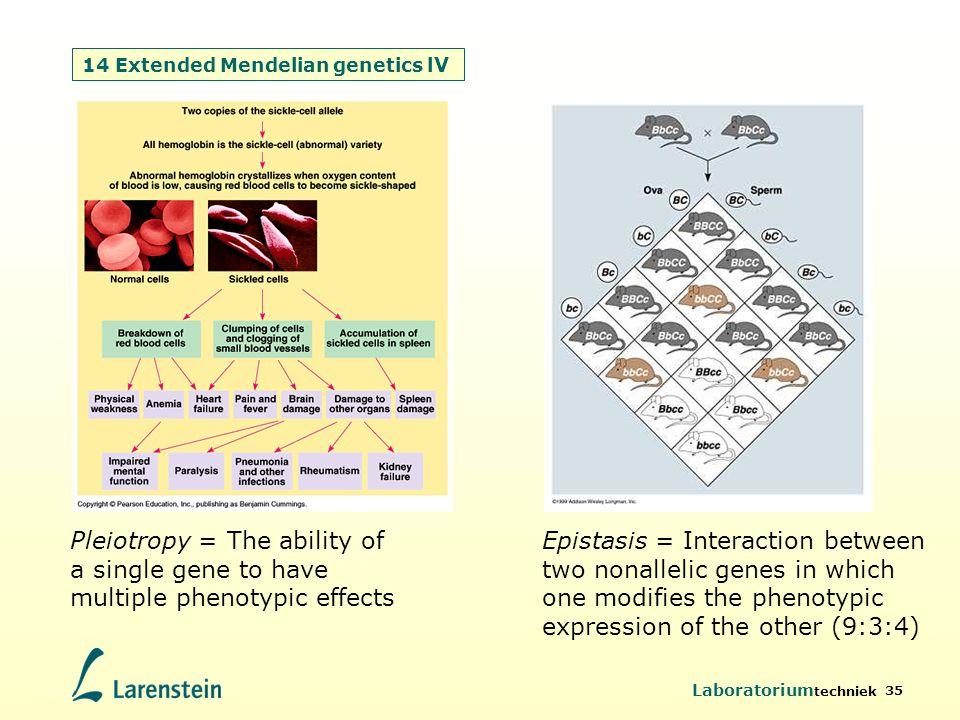 Laboratorium techniek 35 14 Extended Mendelian genetics l V Pleiotropy = The ability of a single gene to have multiple phenotypic effects Epistasis =