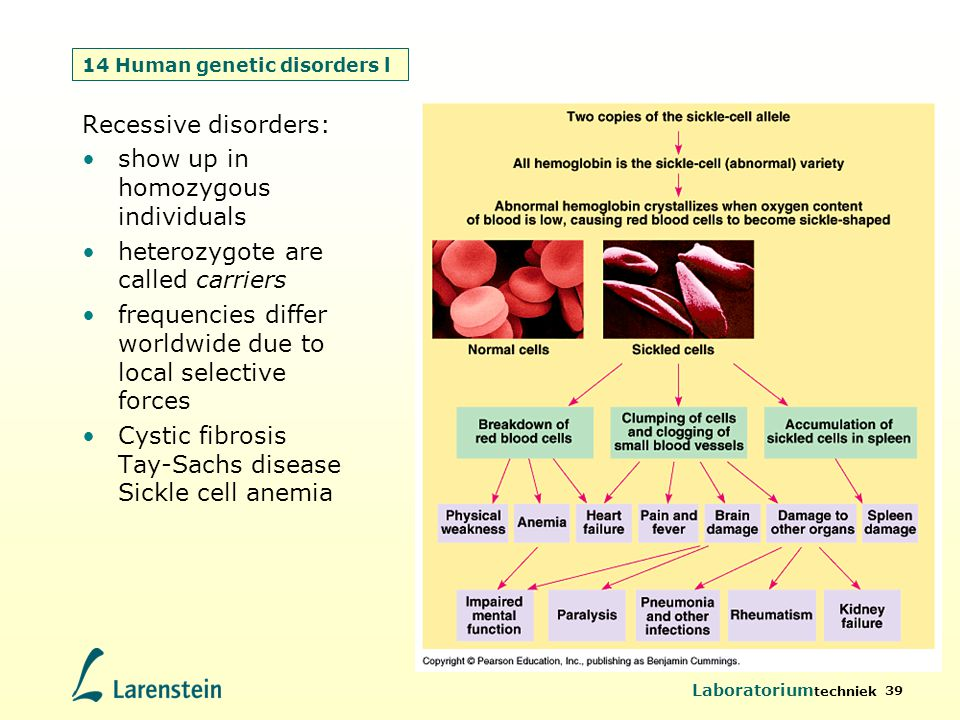Laboratorium techniek 39 14 Human genetic disorders l Recessive disorders: show up in homozygous individuals heterozygote are called carriers frequenc