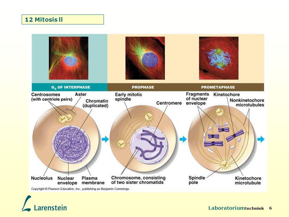 Laboratorium techniek 6 12 Mitosis ll