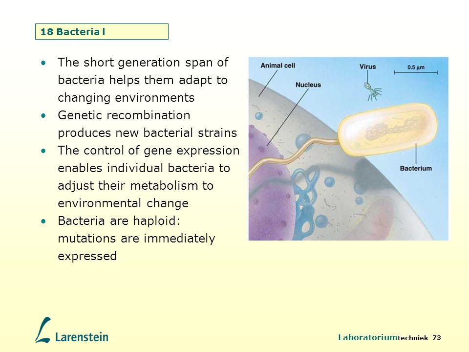 Laboratorium techniek 73 18 Bacteria l The short generation span of bacteria helps them adapt to changing environments Genetic recombination produces