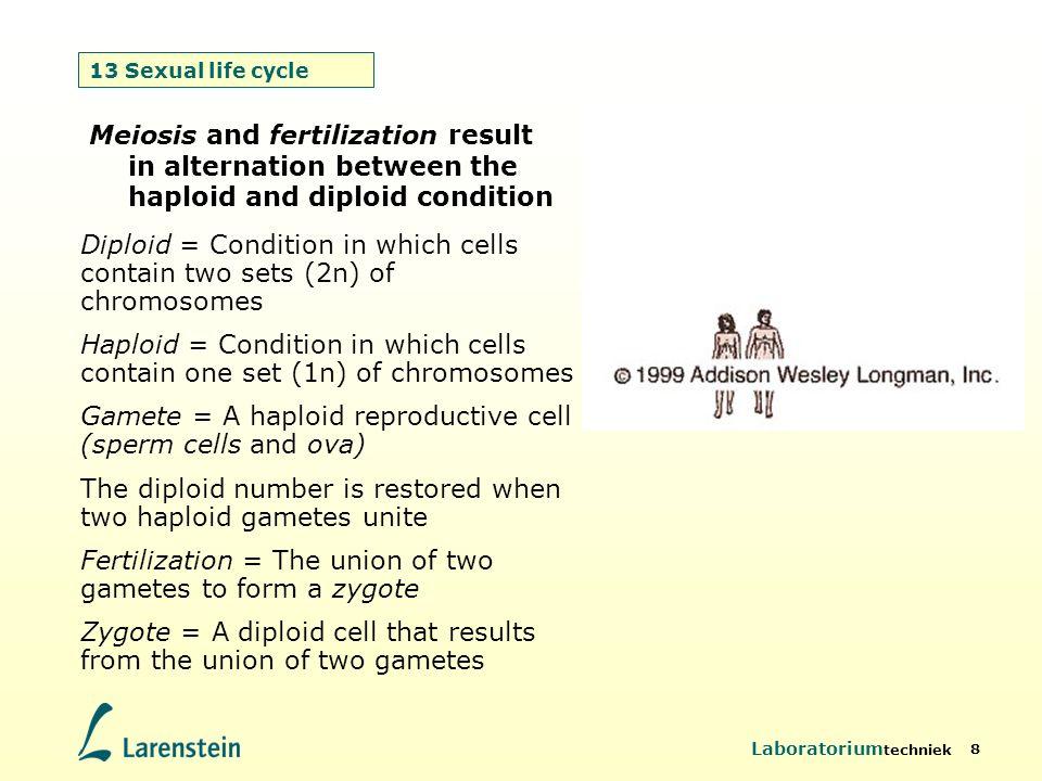 Laboratorium techniek 8 13 Sexual life cycle Meiosis and fertilization result in alternation between the haploid and diploid condition Diploid = Condi