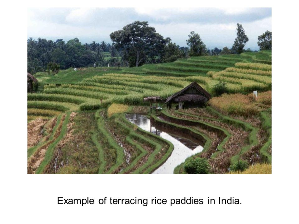 Example of terracing rice paddies in India.
