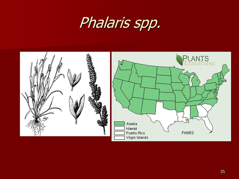 35 Phalaris spp.