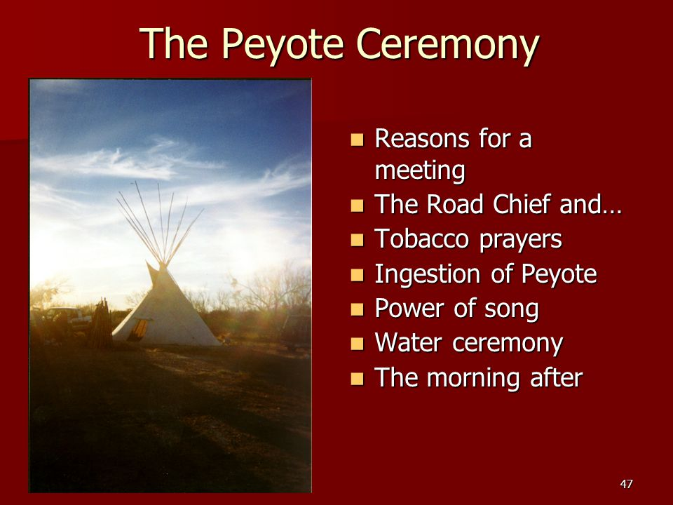 47 The Peyote Ceremony Reasons for a meeting Reasons for a meeting The Road Chief and… The Road Chief and… Tobacco prayers Tobacco prayers Ingestion o