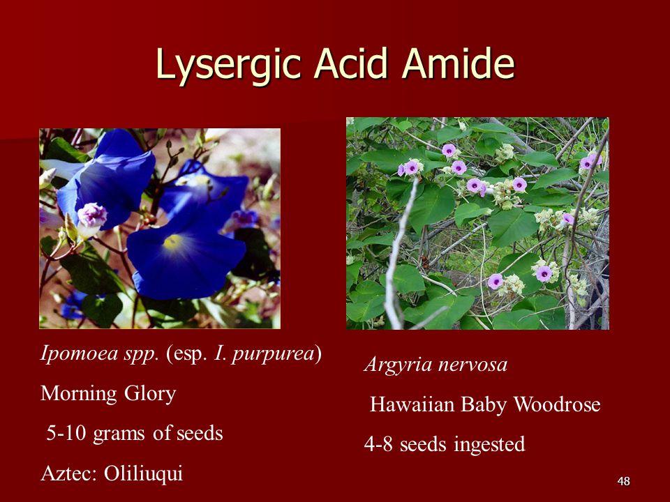 48 Lysergic Acid Amide Ipomoea spp. (esp. I. purpurea) Morning Glory 5-10 grams of seeds Aztec: Oliliuqui Argyria nervosa Hawaiian Baby Woodrose 4-8 s